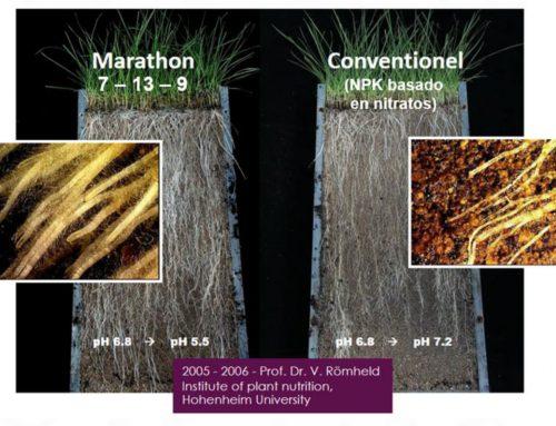 Beneficios de la Fertilización en la linea de siembra